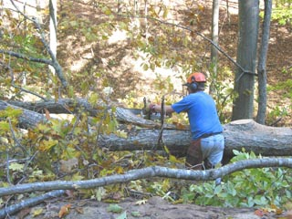 Timber cutting is tough work done by tough men.