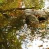 268_Stone Creek Good Ones Resize 02_large 20