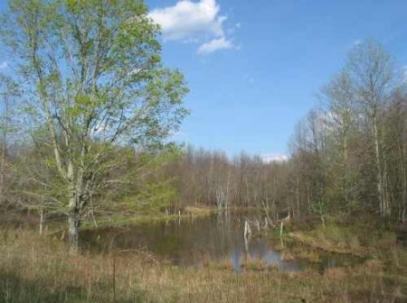 285_Fairview Pond - resize (16)_large