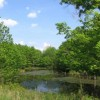 285_Fairview Pond - resize (18)_large