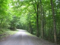 JERICHO FOREST - 32 +/- ACRES