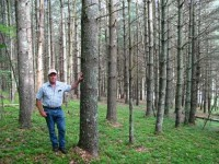 GRIMES FOREST - 65 +/- ACRES