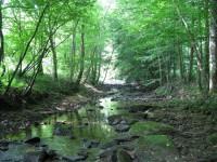 PLUM RUN FOREST 70 +/- ACRES