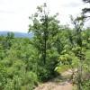 Robin Hood Forest -
