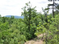 ROBIN HOOD FOREST - 56 +/- ACRES