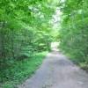 Robin Hood Forest -1