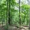 Robin Hood Forest -10