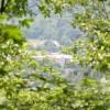 Robin Hood Forest -11