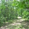 Robin Hood Forest -12