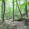 Robin Hood Forest -13