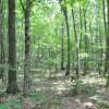 Robin Hood Forest -14