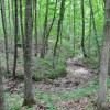 Robin Hood Forest -15