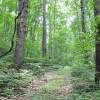 Robin Hood Forest -17