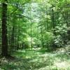 Robin Hood Forest -2