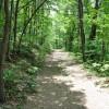 Robin Hood Forest -6