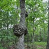 Robin Hood Forest -7
