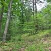 Robin Hood Forest -8