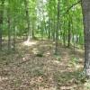 Robin Hood Forest -9