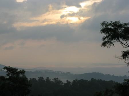 Tempa Forest Preserve 06