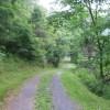 Tempa Forest Preserve 08