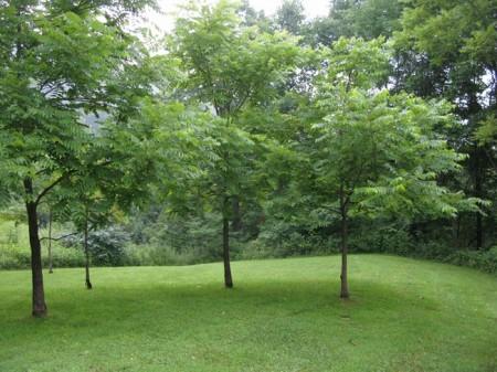 Tempa Forest Preserve 09