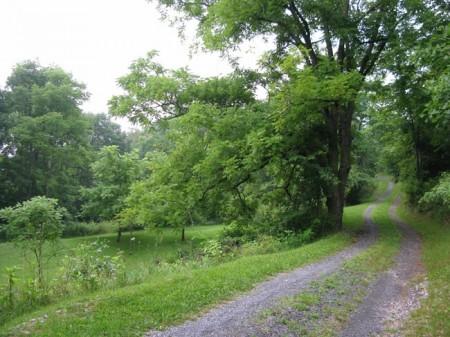 Tempa Forest Preserve 10