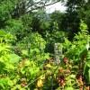 Tempa Forest Preserve 11