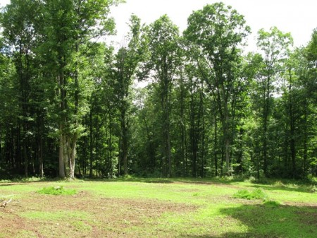 Tempa Forest Preserve 16