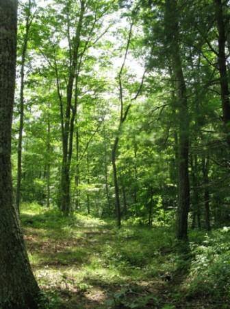 Tempa Forest Preserve 18