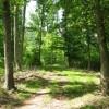 Tempa Forest Preserve 20