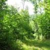 Tempa Forest Preserve 21