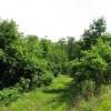 Tempa Forest Preserve 22
