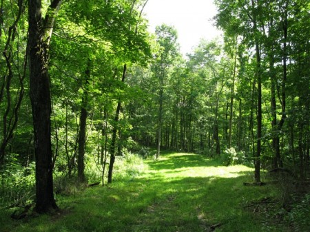 Tempa Forest Preserve 23