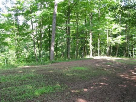 Tempa Forest Preserve 26