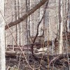 Tempa Forest Preserve 29