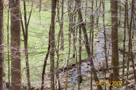 Tempa Forest Preserve 30