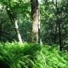Sitlington Creek-14