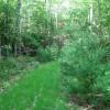 Sitlington Creek-19