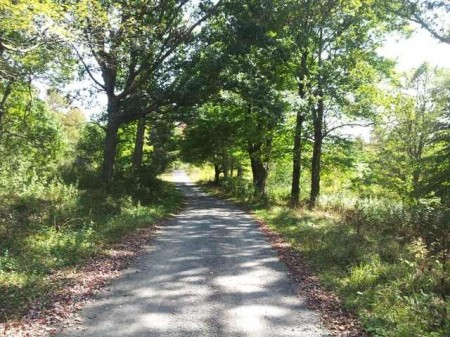 A_Haynes_Little_Sewell_Mountain_Forest tract A