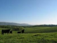 SINKING CREEK FARM 177+/- Acres