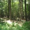 196_Woodlands - Thumbnails (8) nine