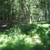 196_Woodlands - Thumbnails seven