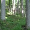 197_Stiltner Thumbnail 4