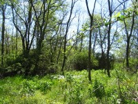 LOST WORLD ROAD, 4.52 +/- ACRES