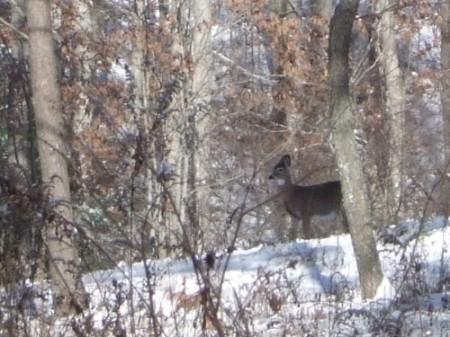 242_Holliday - deer (1)_large 9