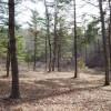 242_Stonehenge 4 Acres - Web Resize 07_large
