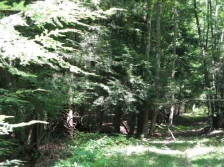 261_Spruce Grove Farm - Resize 14_large