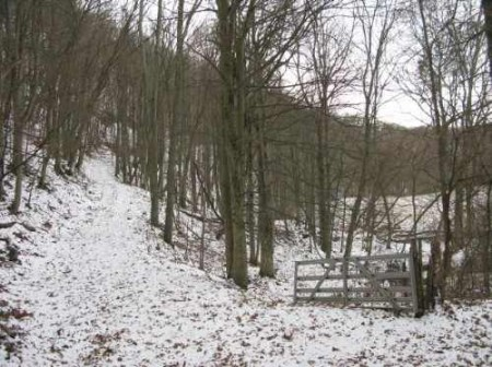 265_Houchins Farm - 181 Acres - resize 13_large