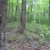 269_Lefthand Fork Woodlands (10)_large