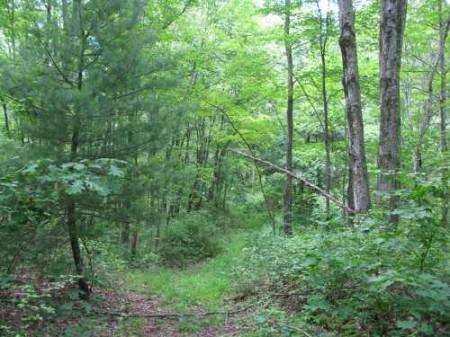 269_Lefthand Fork Woodlands (12)_large